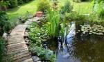 Wie Sie Ihren Gartenteich richtig anlegen