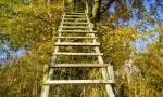 Wie Sie Holzschutz richtig lasieren und lackieren